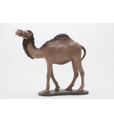 Camello pie sin carga