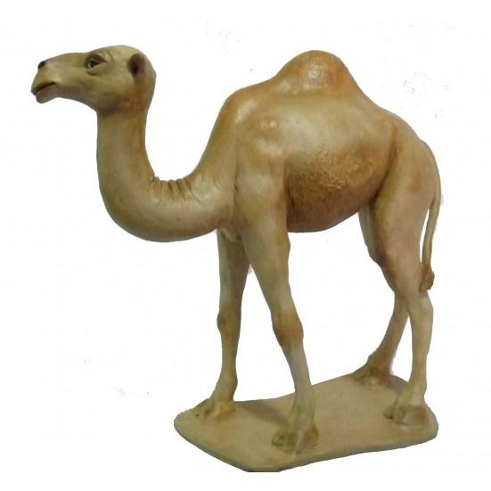 Camello en Pié Nº 7